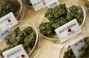 Marijuana buds are shown in a medical marijuana dispensary in Oakland