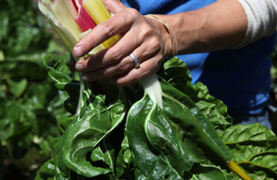 One Cup of Swiss Chard: 1g