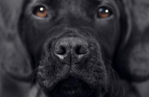 Pet Detective A Dog That Sniffs Out Colon Cancer Time Com
