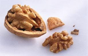 sb10061851ee-001walnuts3-29-11crop