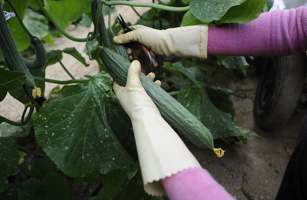 Spanish Farmers Suffer Losses Due To EHEC Outbreak