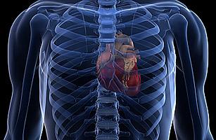 heart_stem_cell_1114