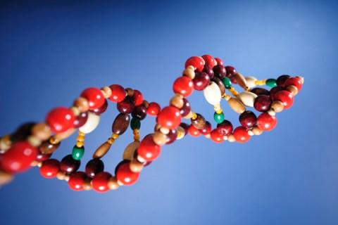 DNA Moldel