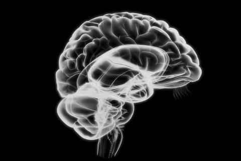 1500_hl_brain_1118